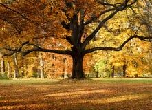 Der große Baum Stockfotografie