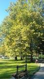 Der große Baum Stockbild