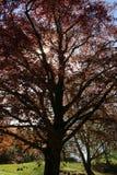 Der große Baum Stockbilder