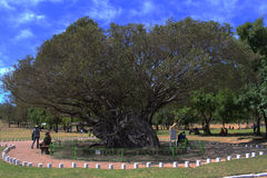 Der große Baum Stockfoto