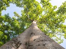 Der große Baum im Garten Lizenzfreies Stockbild
