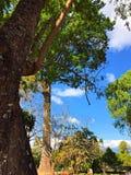 Der große Baum und der blaue Himmel Lizenzfreie Stockfotos