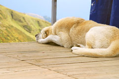 Der große Hund betrachtet Berge Stockbild
