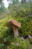 Der große Pilz Lizenzfreies Stockfoto