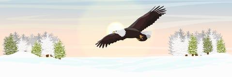 Der große Weißkopfseeadler fliegt über das Tal und die Tannenwaldwinternatur lizenzfreie abbildung