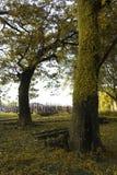 Der gro?e Baum stockfotografie