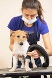 Der Groomer benutzt einen Haartrockner, um Hund zu trocknen Lizenzfreie Stockfotos