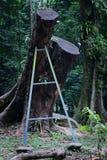 Der hängende Baum im Wald Stockbilder