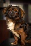 Der hübsche Hund lizenzfreies stockfoto