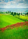 Blumen-Hügel und Zypressen Lizenzfreies Stockbild
