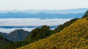 Der Hügel des Feldes der mexikanischen Sonnenblume (Dok Buatong) Lizenzfreies Stockfoto