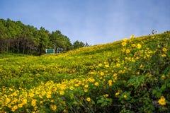 Der Hügel des Feldes der mexikanischen Sonnenblume (Dok Buatong) Stockfotografie