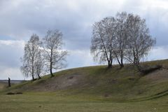 Der Hügel mit Birken lizenzfreies stockfoto