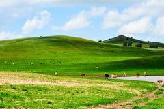 Der Hügel und das Wasser Stockbilder
