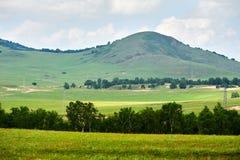 Der Hügel und die Bäume auf der Wiese Stockfotos