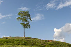 Der Hügelhintergrund des Himmels und des Baums Lizenzfreie Stockfotos