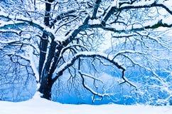 Haariger Baum bedeckt mit Schnee Lizenzfreies Stockbild