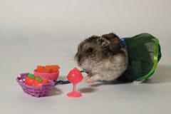 Der Hamster auf dem Spielplatz Stockfoto