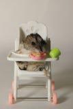 Der Hamster auf dem Stuhl Stockbilder