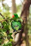 Der hell mit Federn versehene Papagei Stockbilder