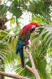 Der hell mit Federn versehene Papagei Lizenzfreie Stockbilder