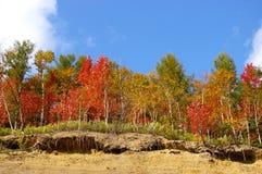 Der helle Herbstbaum auf Ausbrechen. stockfoto