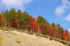 Der helle Herbstbaum auf Ausbrechen. lizenzfreies stockbild