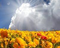 Der helle Sonnenschein, der durch die Wolken scheint lizenzfreies stockbild