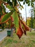 Der Herbst Stockbilder