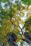 der Herbst im Park von Suzhou-Garten in China stockbild