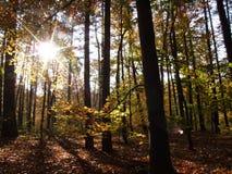 Der Herbst ist mehrfarbig Stockfoto