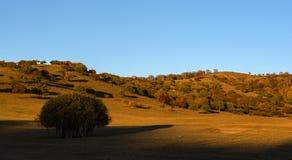 Der Herbst von Bashang-Grasland Stockbild