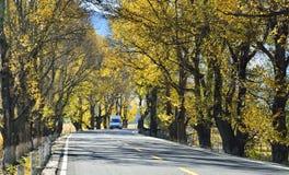 Der Herbst von Xinduqiao Lizenzfreies Stockfoto