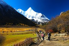 Der Herbst am Yading-Naturreservat in Daocheng-Grafschaft, China Stockfoto