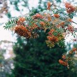 Der Herbstbaum lizenzfreie stockbilder