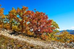 Der Herbstbaumabhang Lizenzfreie Stockfotografie