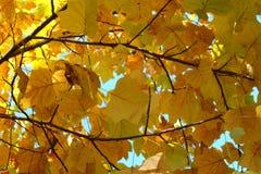 Der Herbstlaub auf den Niederlassungen Lizenzfreies Stockfoto