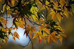 Der Herbstlaub, Tokyo lizenzfreies stockfoto