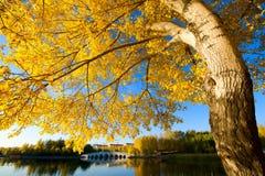 Der herbstliche große Baumsonnenaufgang Stockfotografie