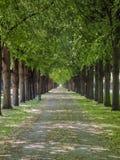 Der Herrenhausen-Garten Gasse im Park stockfotografie