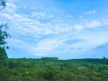 Der Himmel über Ölpalmenplantage lizenzfreies stockbild