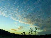 Der Himmel über Ölpalmenplantage stockbild