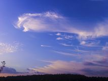 der Himmel über den Bäumen im Wald lizenzfreies stockbild
