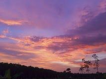 der Himmel über den Bäumen im Wald stockfotografie
