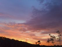 der Himmel über den Bäumen im Wald stockfotos