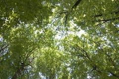 Der Himmel durch grünes Laub Stockfotos