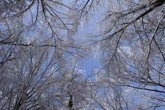 Der Himmel in einem Winterholz Stockfoto