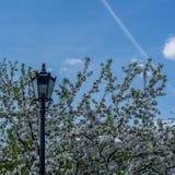 Der Himmel im Frühjahr Park Stockbilder