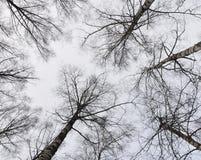 Der Himmel mit Bäumen Lizenzfreies Stockfoto