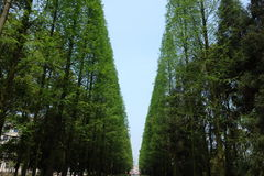 Der Himmel unter den Bäumen Stockbilder